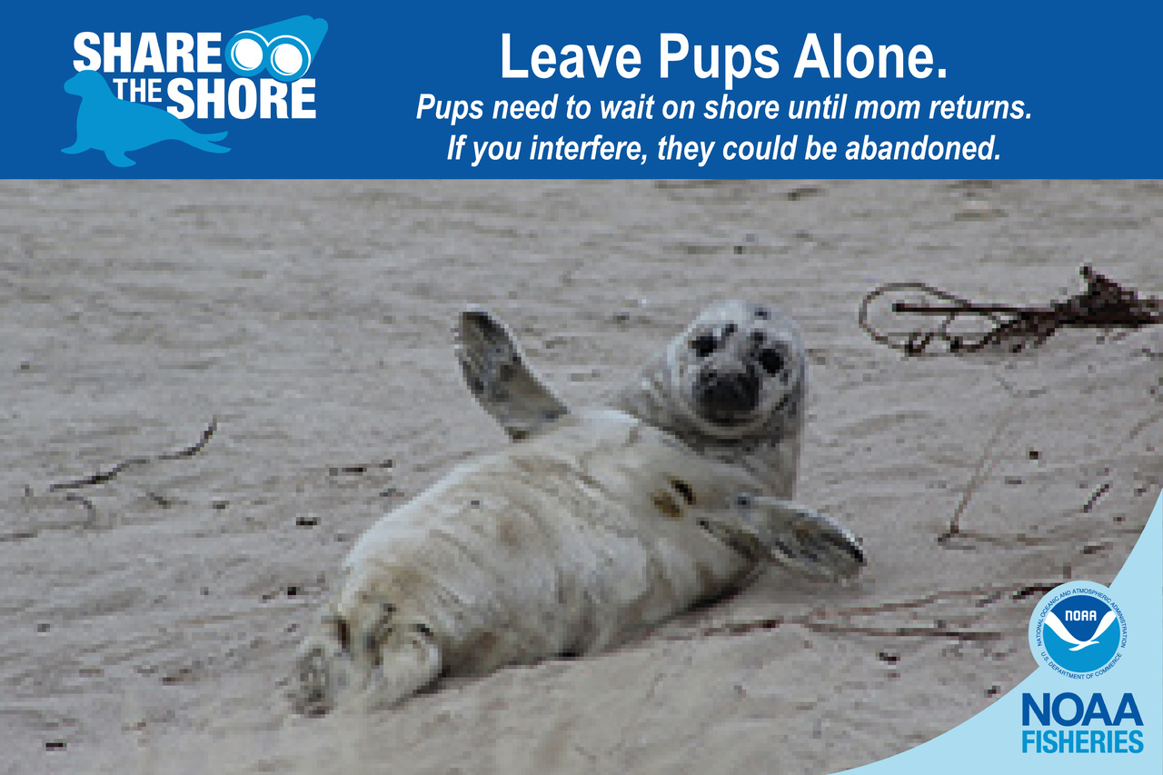 Leave Pups.jpg