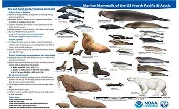 marine mammals of Alaska and the Arctic
