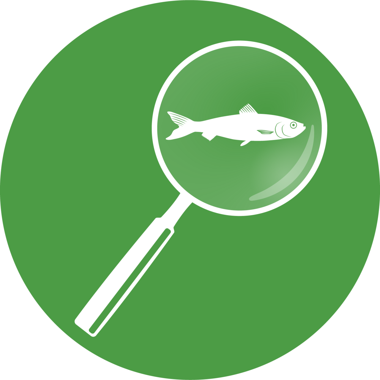 Small icon of Atlantic herring under a magnifying glass for special collections