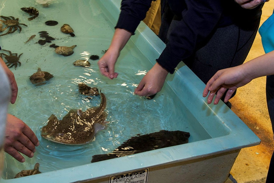Touch tank filled with crabs and fish, people reaching into tank.