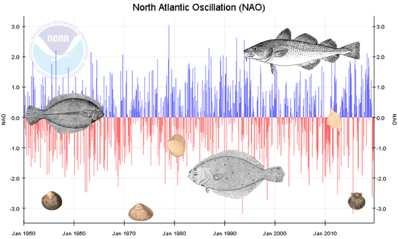 Chart showing effects of North Atlantic Oscillation on various fish and shellfish species
