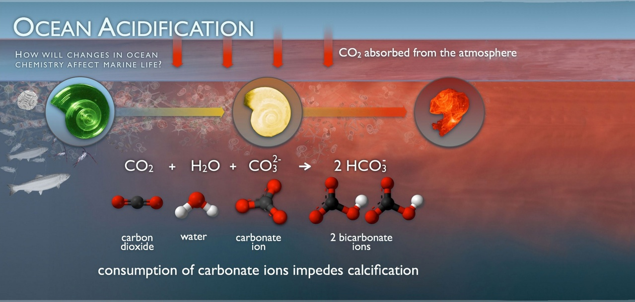 ocean_acidification.jpg