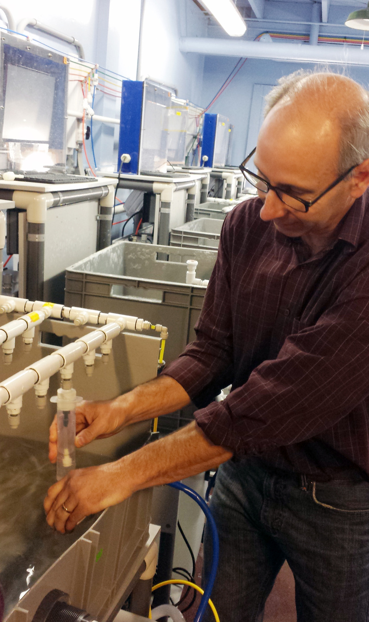 Scientist studies ocean acidification by studying effects of different ocean conditions on marine life.
