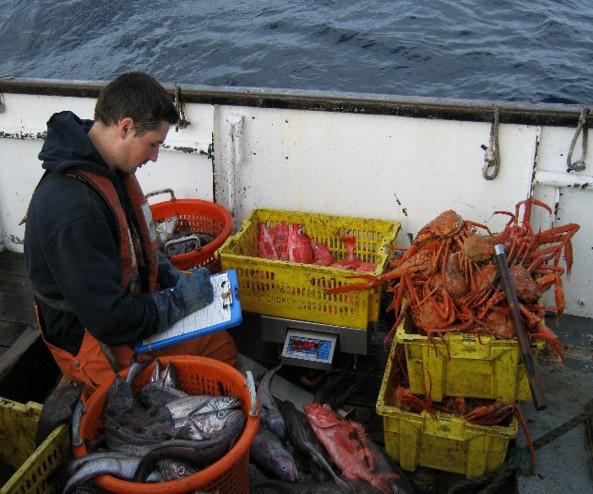Ocean fram catch processing.jpg