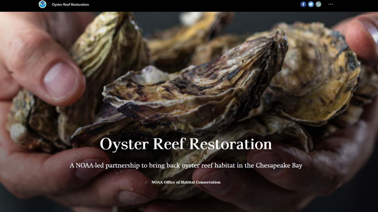 oyster storymap screenshot.jpg