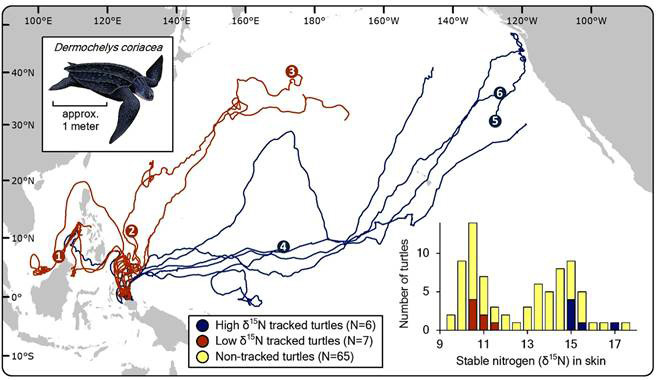 pacific leatherback nesting map.jpg