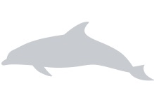 placeholder--dolphin.png