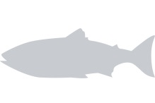 placeholder--fish.png