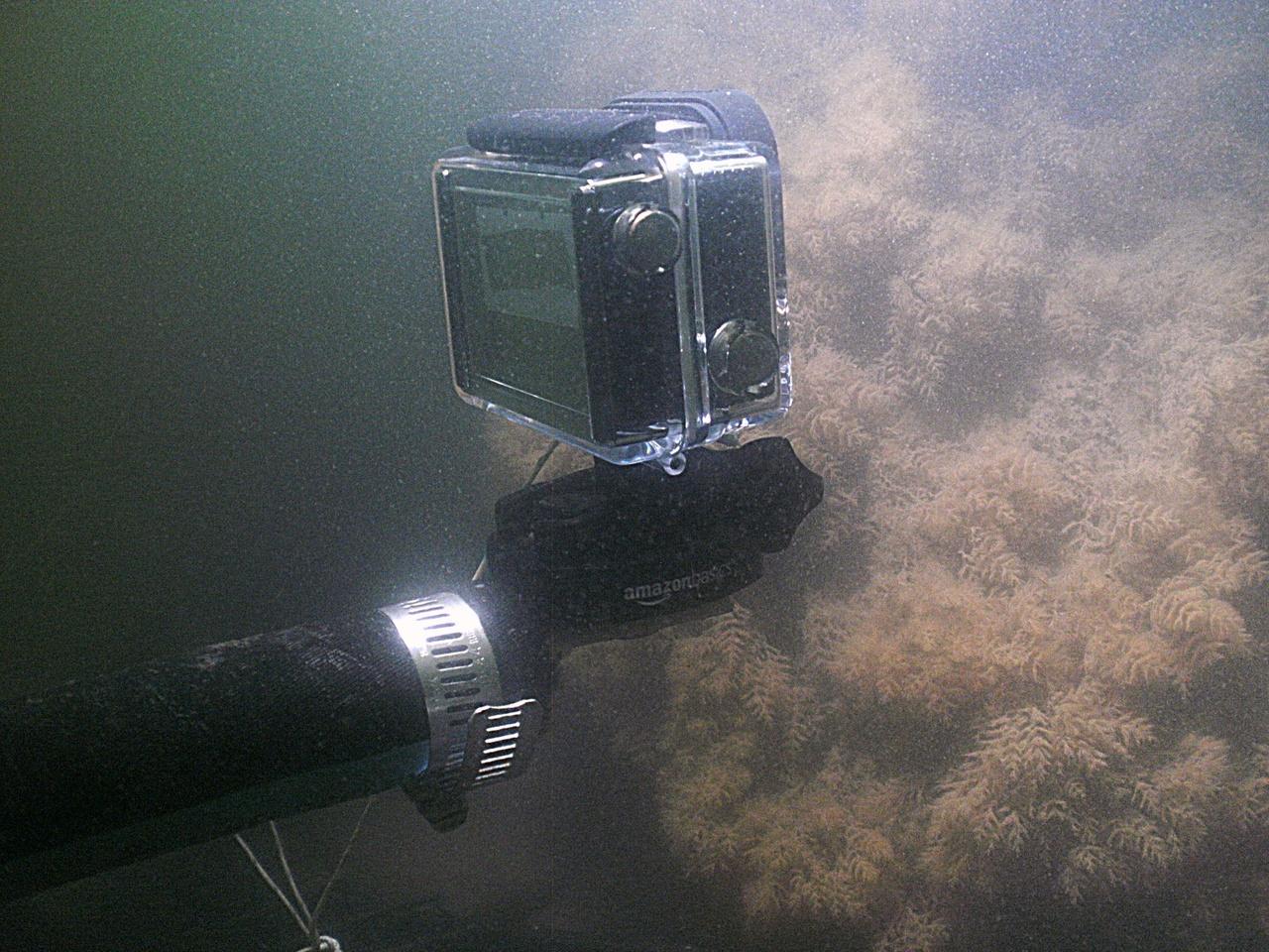 ReefTripod1.jpg
