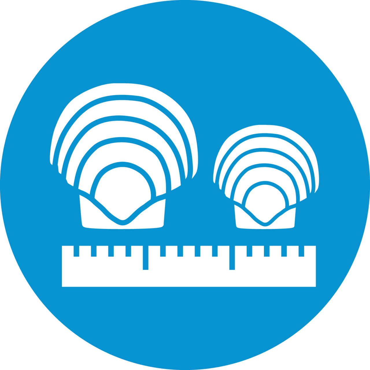 scallop shells and ruler