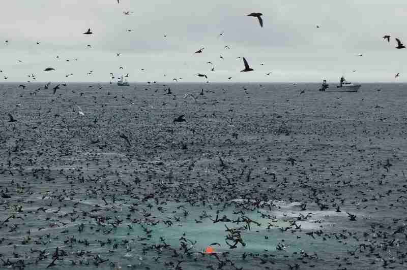 seabirds near fishing vessels