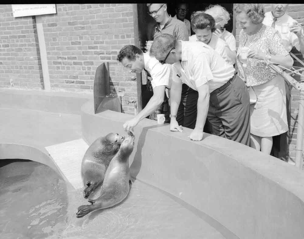 Seal pool with 2 seals being fed by a male spectator as others watch (1963)