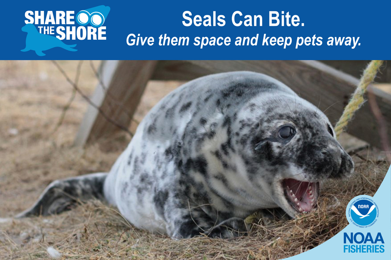Seals Bite.jpg