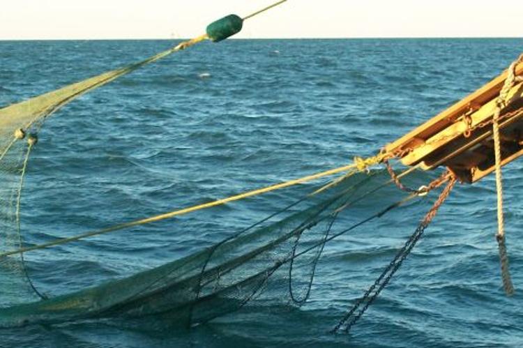 Shrimp trawl gear_750x500.jpg