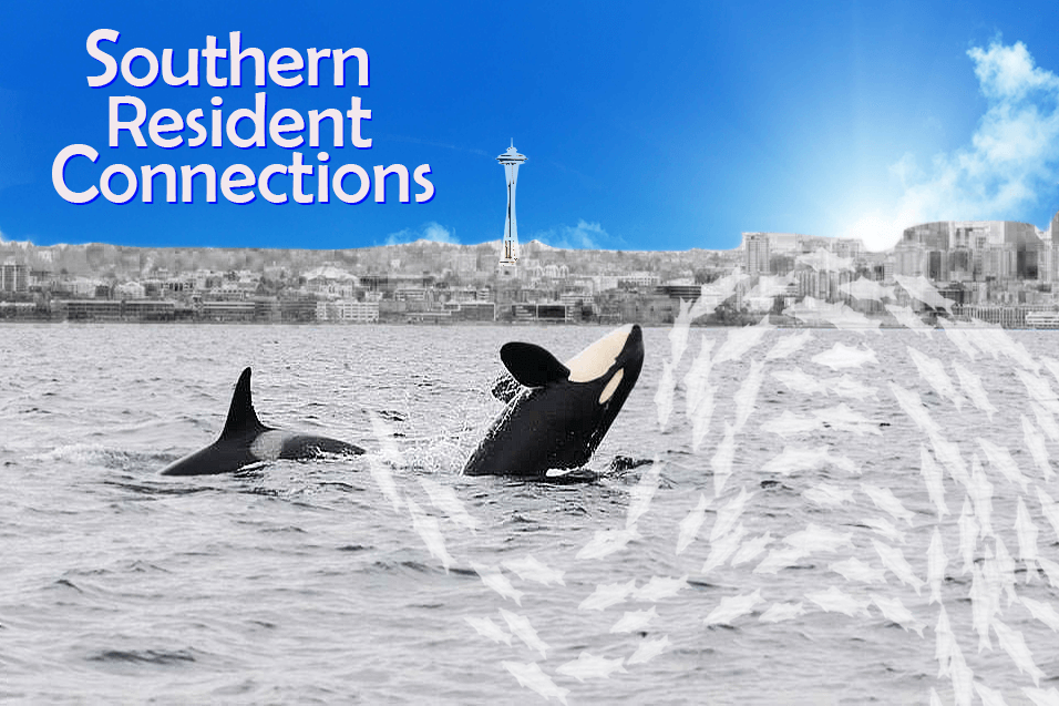 Southern Resident Connections