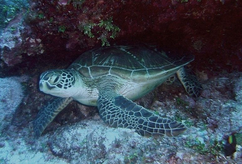 turtle_release_page_image_2.jpg