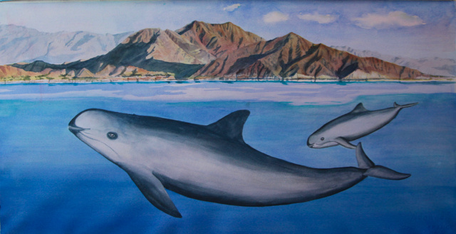 Painting of Vaquita, cow/calf pair, swimming near San Felipe, BC, Mexico. Artist: Barbara Taylor