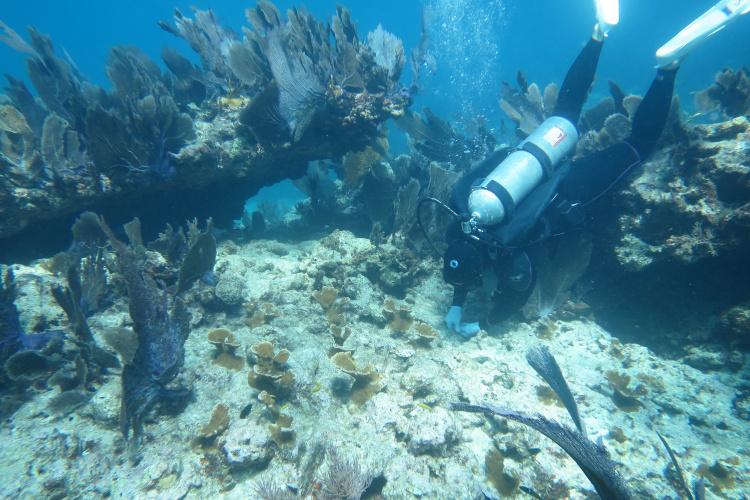 WD_Coral_Restoration.JPG