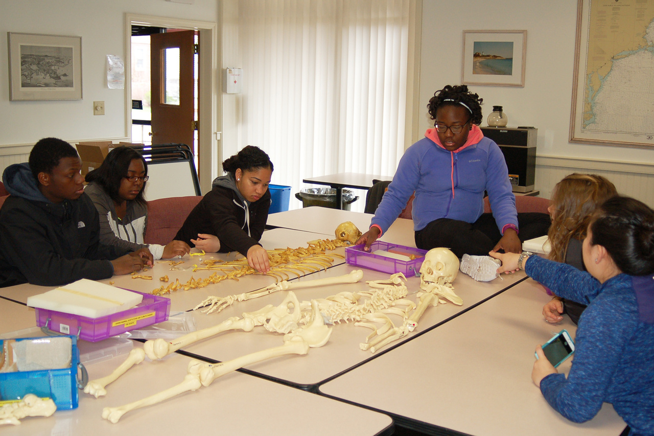 High school interns studying skeletons with instructor