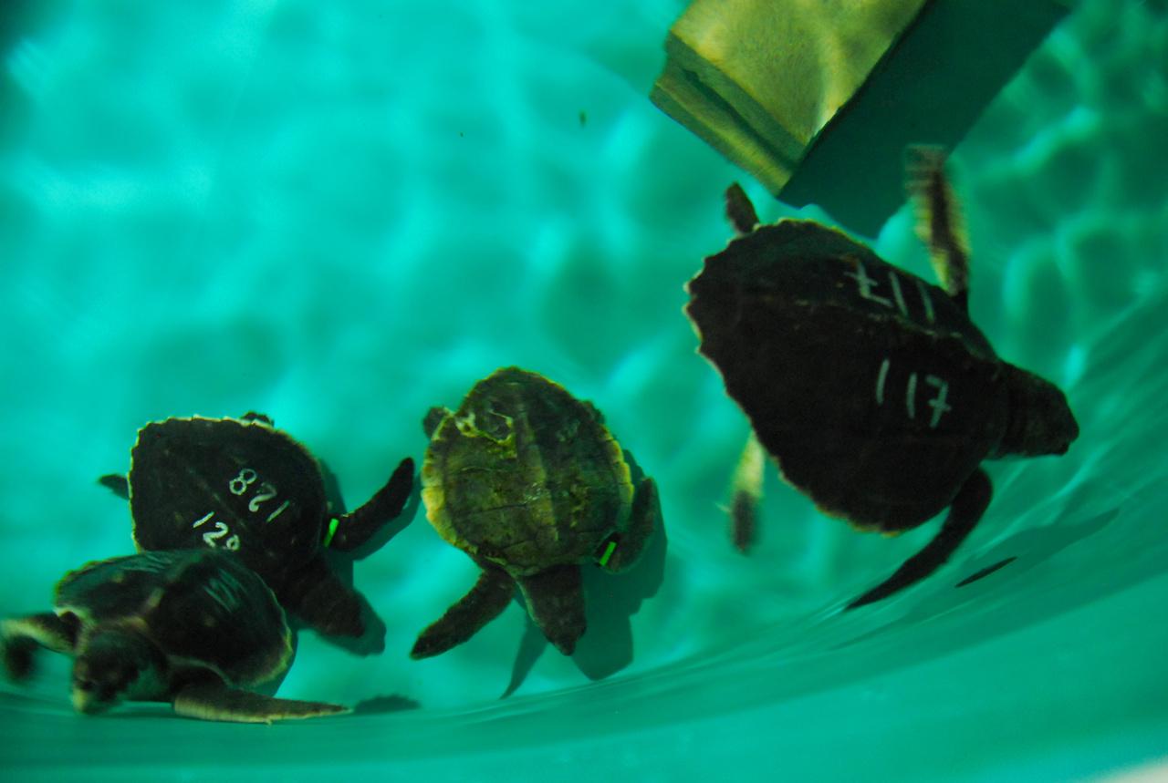 turtles swimming in tank