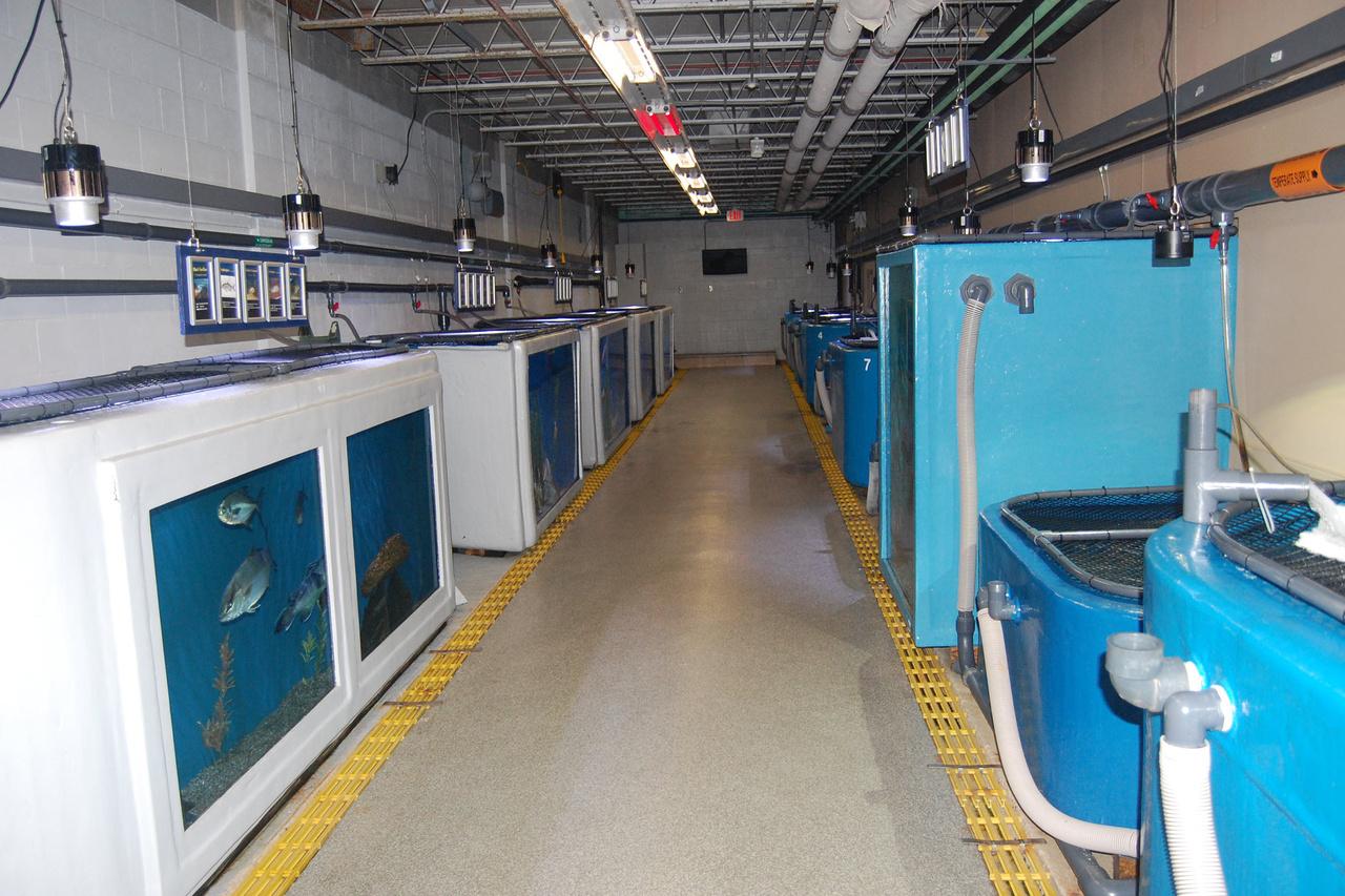 aquarium upper level showing backs of tanks with fish