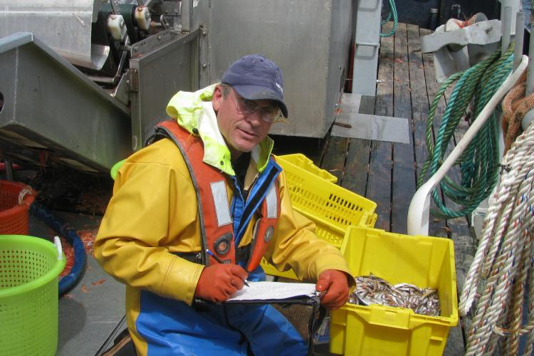 An observer on deck of a ship during a pink shrimp trawl