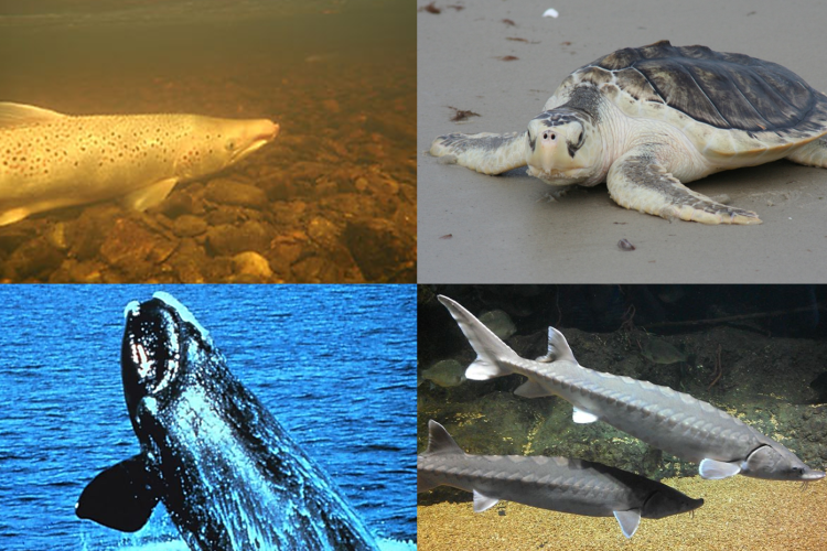 Endangered Species Act Listed Species
