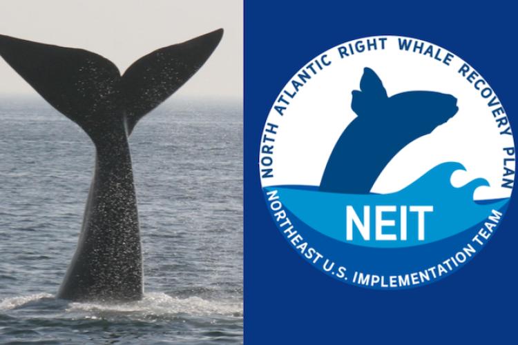 logo for NEIT