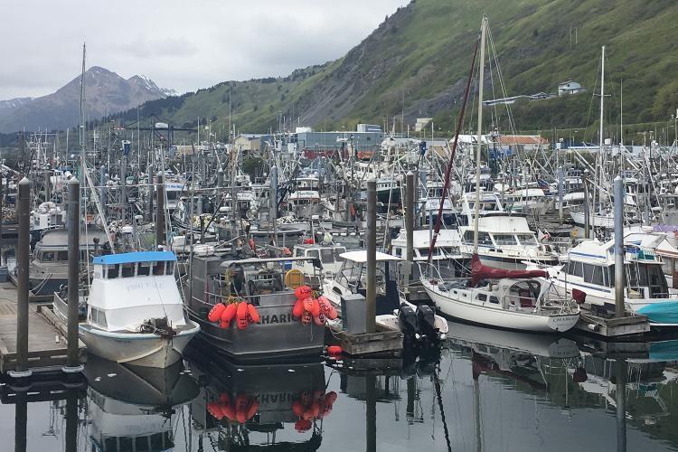 Photo of a boat filled marina in Kodiak, Alaska.