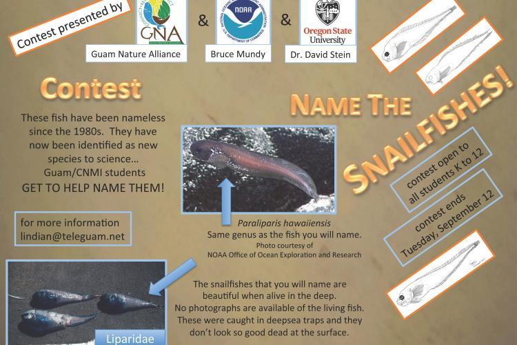 Snailfish flyer