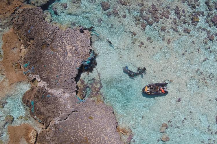 3936x2624-Midway-reef-nets-StevenGnam.jpg