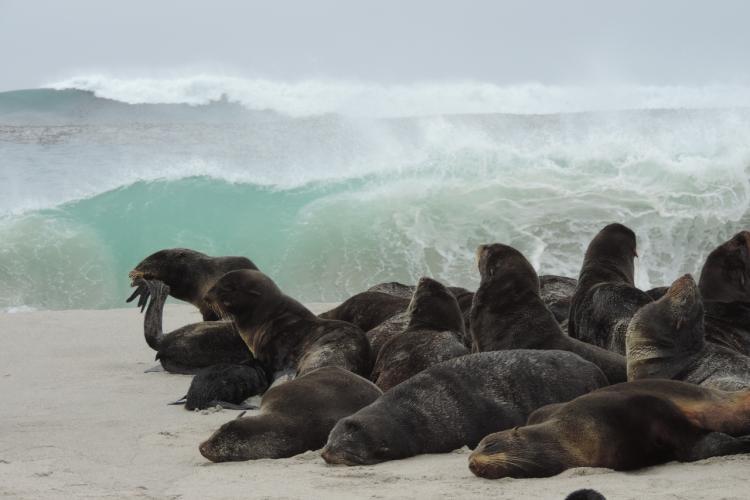 4896x3672-northern-fur-seals-channel-islands.jpg