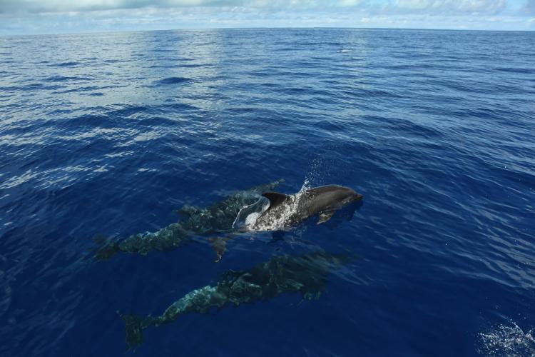 5568x3712-bottlenose-dolphins.jpg
