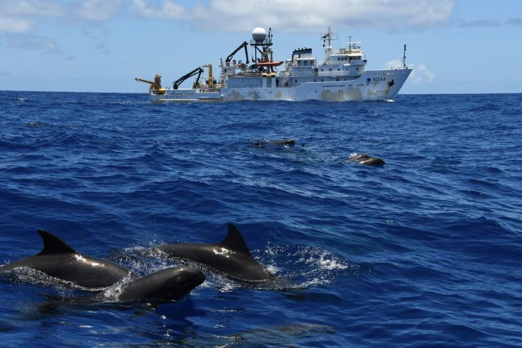 5568x3712-Melon-headed_whales_surfacing_off_Sette_starboard_side-NOAA-PIFSC.jpg