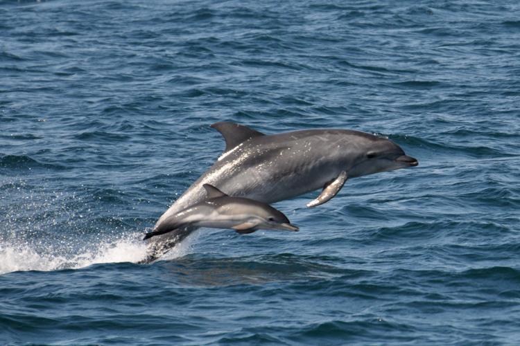750x500-bottlenose-dolphin-istock.jpg