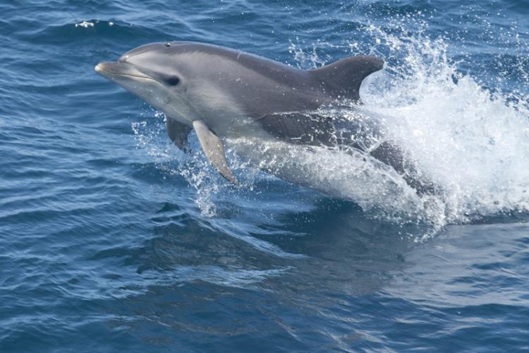 750x500-bottlenose-dolphin.jpg