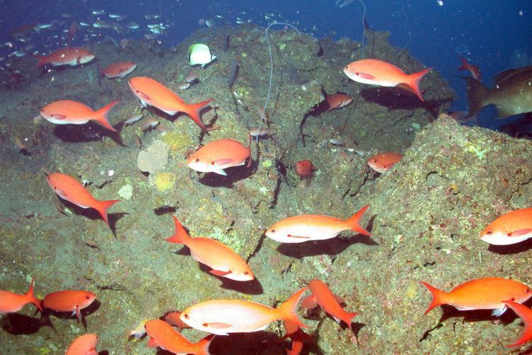 750x500-creolefish.jpg