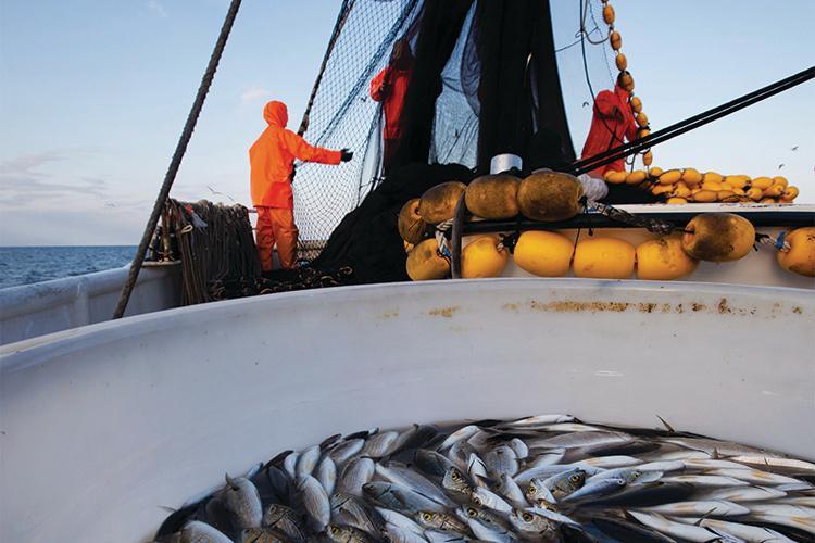 750x500-fishermen-nets-boat-iStock.jpg