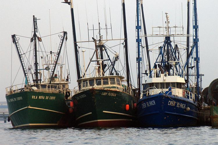 Bows of three fishing vessels tied together.