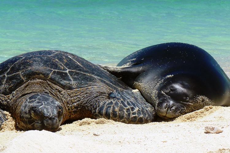 750x500-monk-seal-and-sea-turtle-sleeping-together-NOAA-PIFSC.jpg