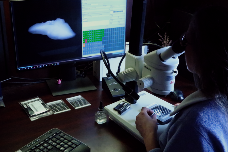 Otolith aging, using microscop and large monitors.