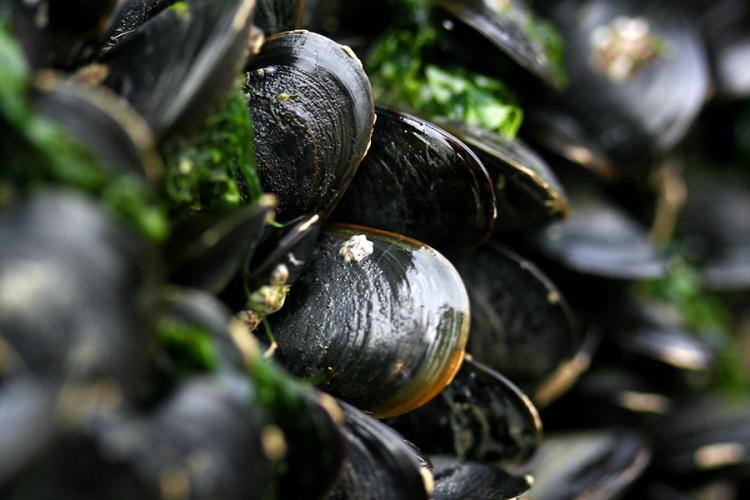 900x600-blue-mussel-NOAA-Shutterstock.jpg