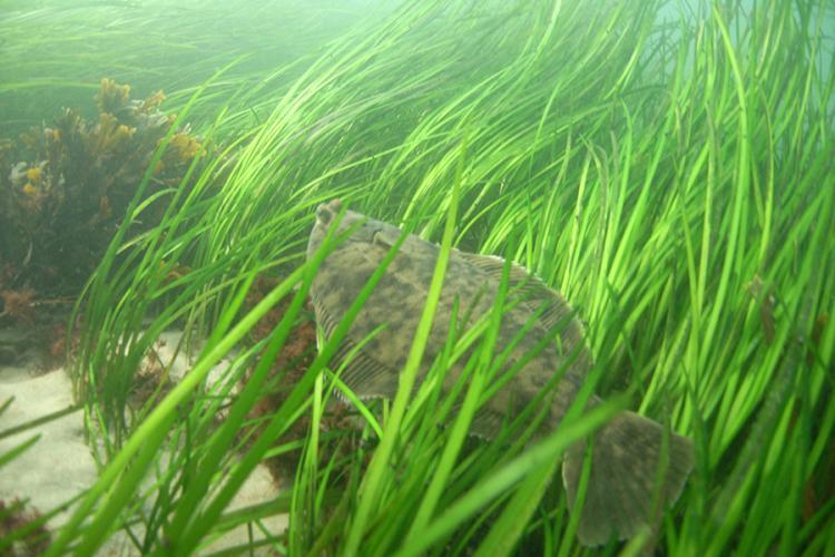 900x600-winter-flounder-NOAA.jpg