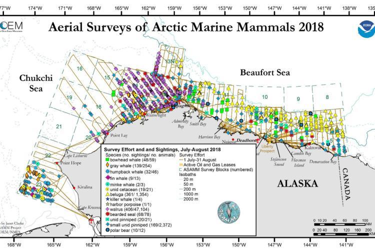 Aerial_Surveys_of_Arctic_Marine_Mammals-2018 (2).jpg