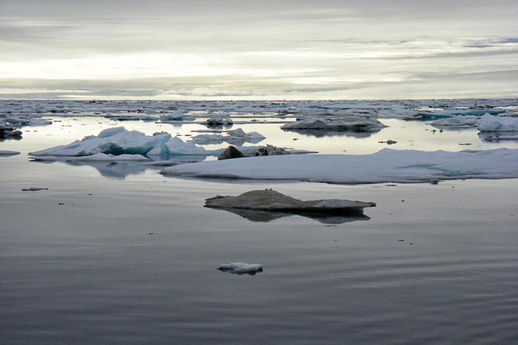 AFSC_Alaska_Sea_Ice.jpg