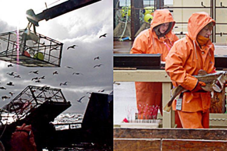 Alaska Fisheries Interaction Team - Pacific Cod Localized Depletion Study.jpg