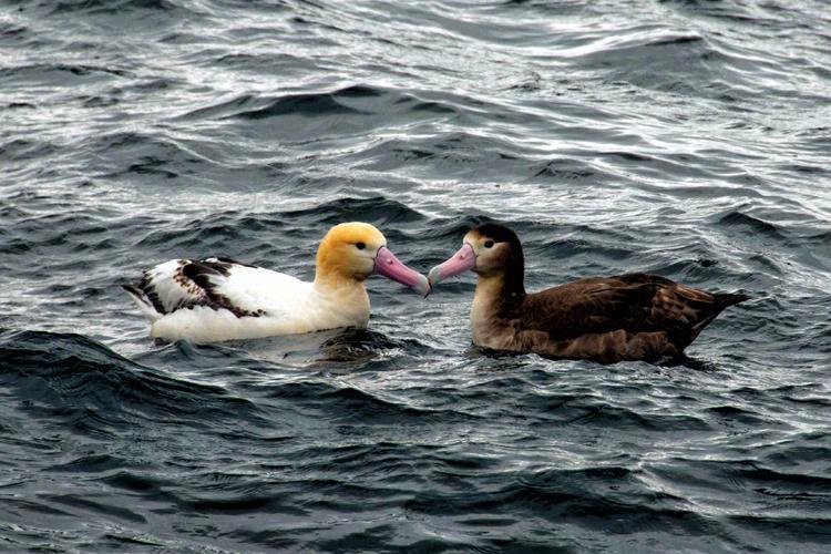 Albatross-thumb.jpg