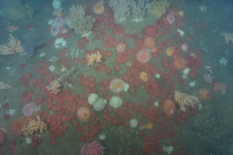 Various Anemones on the sea floor.