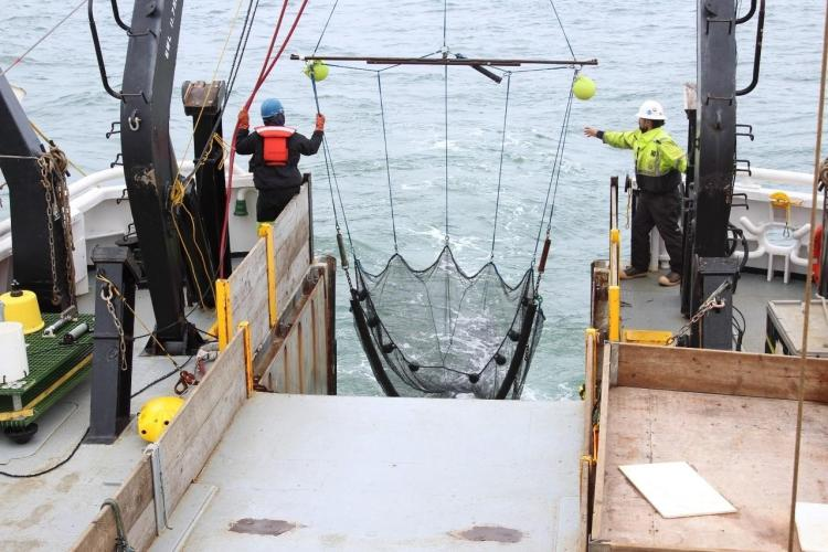 benthic trawl in Chukchi.jpg