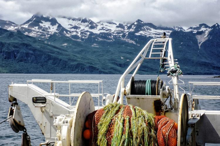 Bottom Trawl Survey_KShotwell- Retouched.jpg